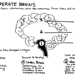 Three Separate Brains - Whiteboard Illustration